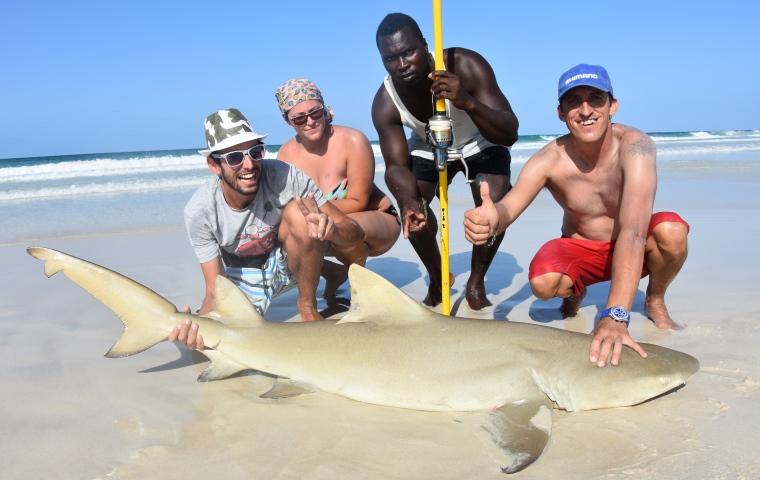 Shore fishing for Shark fishing from shore